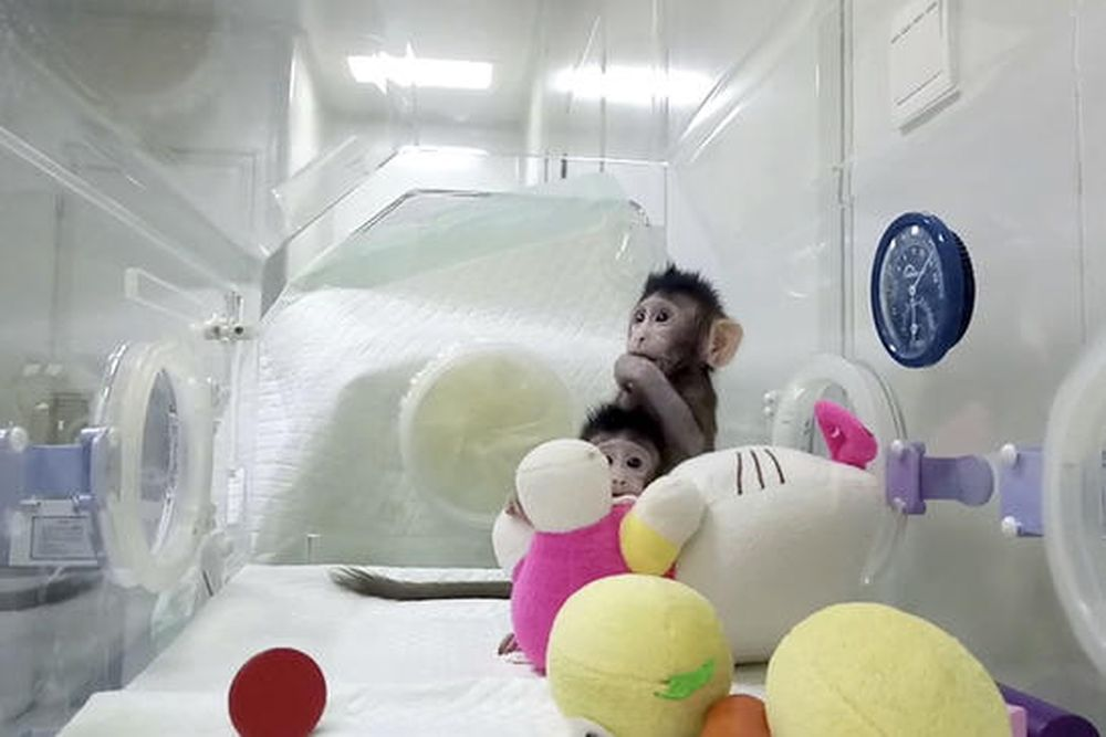 macacos2