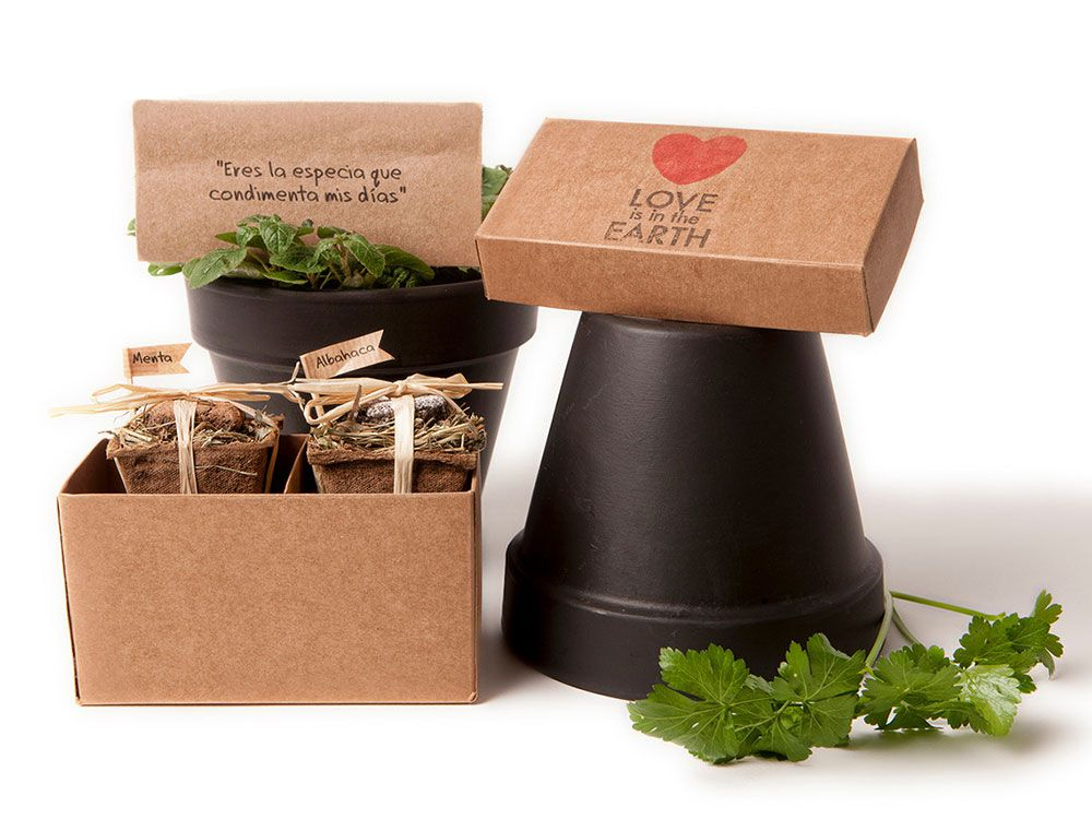 Kit de cultivo de plantas aromáticas Love is in the Earth