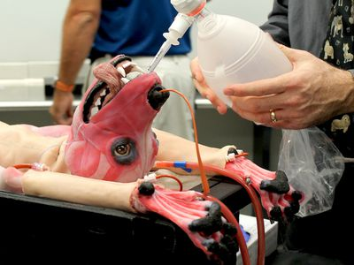 SynDaver Synthetic Canine