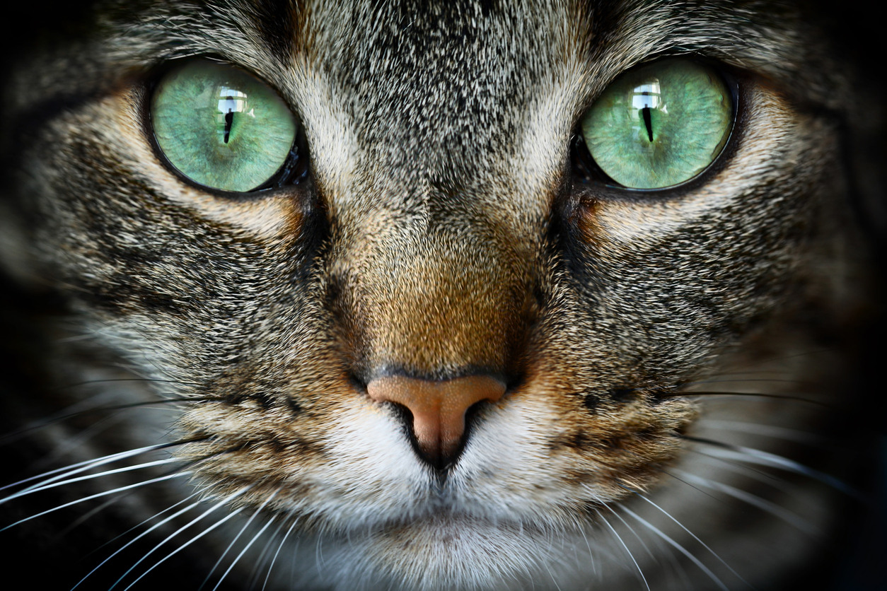 Images Of Cats With Big Eyes