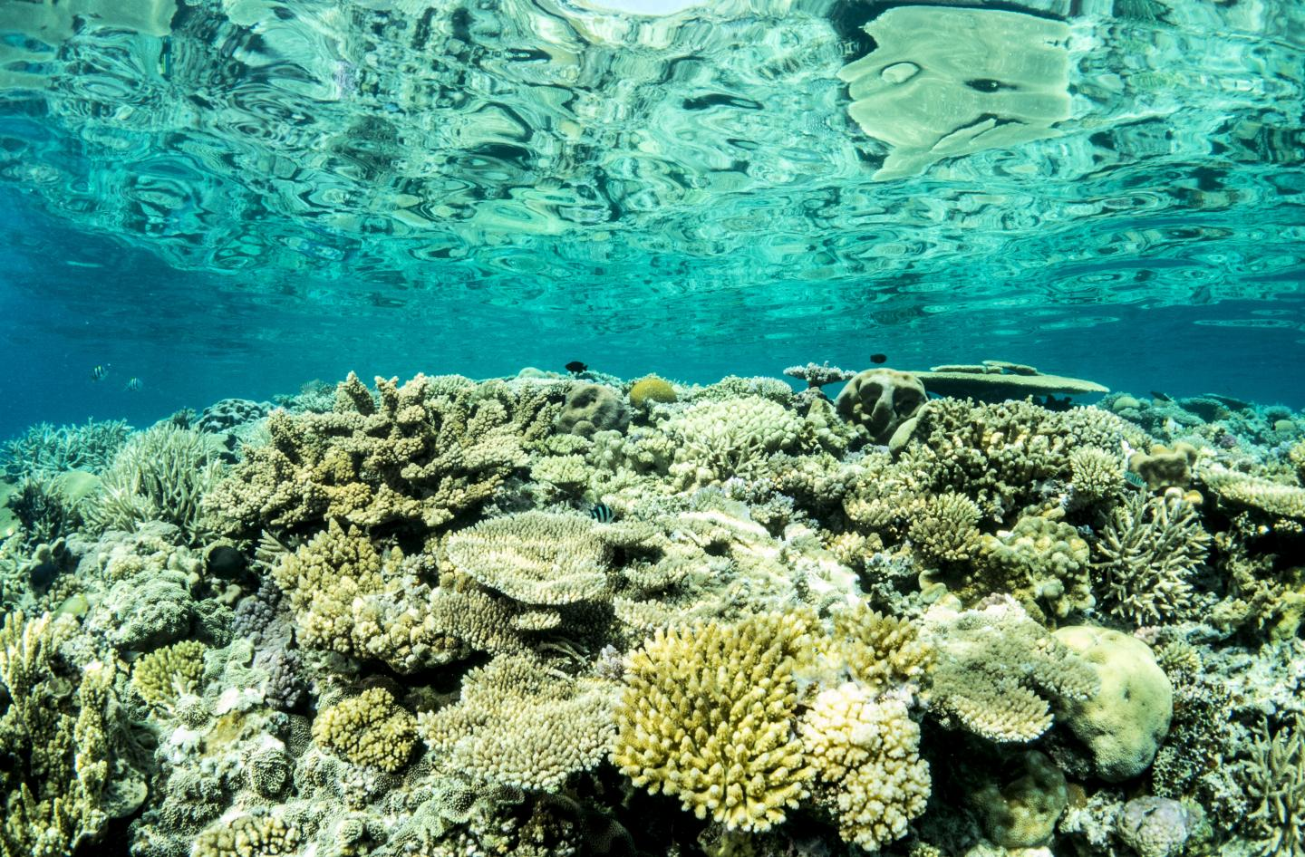 largest coral reef research - HD4000×2628