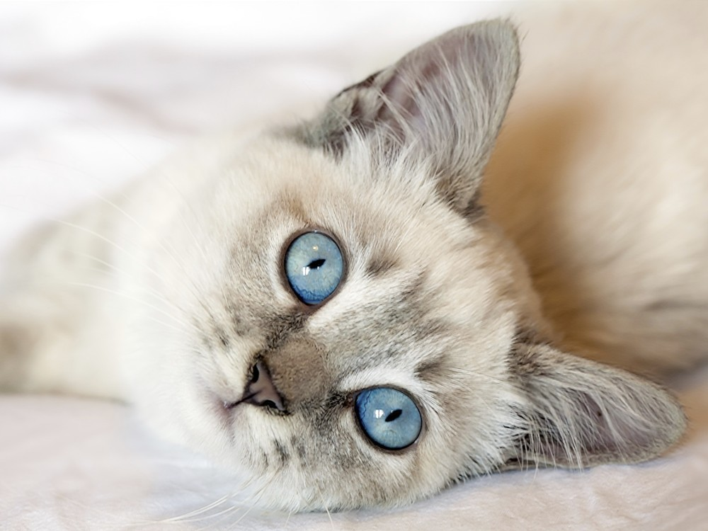 A beautiful kitten with a sweet cougar j amp t 6